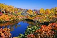 北海道 紅葉のえぞ沼 大雪高原沼