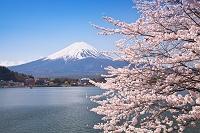 山梨県 富士山と桜と河口湖