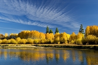 アメリカ合衆国 オレゴン州 黄葉