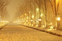 神奈川県 鎌倉若宮大路の光の灯った灯籠の雪景色