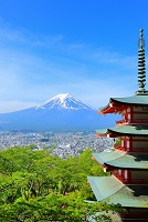 山梨県 新倉山浅間公園 残雪の富士山と新緑の忠霊塔