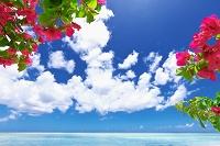 グアム タモンビーチとブーゲンビリアの花