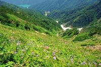 岐阜県 白山の花畑と大白川ダム湖遠望