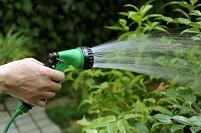 庭木に潅水