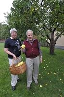 スウェーデン ヴェステロース 庭木の定番のリンゴ