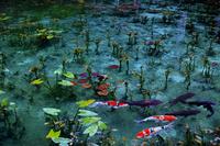 岐阜県 根道神社 モネの池