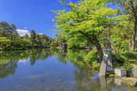 石川県 新緑の兼六園 徽軫灯籠