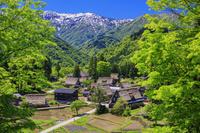 富山県 新緑の相倉合掌造り集落