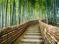 京都府 嵐山 竹林