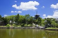 奈良県 猿沢池より興福寺五重塔 奈良公園