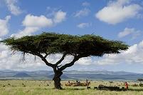 ケニア ライキピア