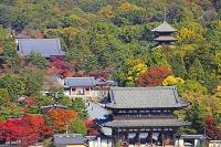 京都府 双ヶ丘から望む紅葉の仁和寺