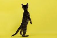 立ち上がった猫の後ろ姿