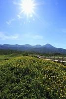 北海道 知床五湖 高架木道