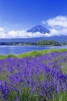 山梨県 富士山とラベンダー
