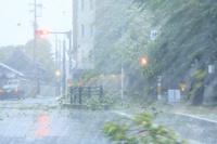 台風の暴風雨で散乱する街路樹