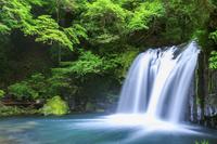 静岡県 河津七滝 初景滝