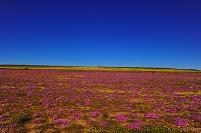 南アフリカ共和国 ボッタークルーフの花園
