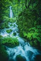 青森県 滝を経て草木の間を下る沢水