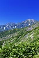 長野県 黒菱平より鹿島槍ヶ岳と五竜岳