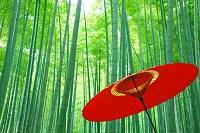 京都府 竹林と和傘