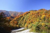 山形県 小国町・飯豊連山 玉川と紅葉