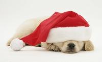クリスマス 犬