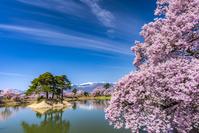 長野県 桜咲く六道の堤と中央アルプス