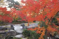京都府 長岡天満宮 錦景園の紅葉