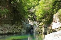奈良県 新緑のみたらい渓谷