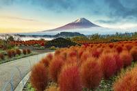 河口湖大石公園からの富士山の朝焼けとコキアの紅葉
