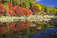 愛知県 紅葉と香嵐渓