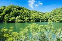 青森県 十二湖 落口の池