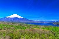 山梨県 パノラマ台からの富士山と北岳(南アルプス) 山中湖