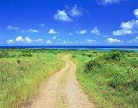 沖縄県・石垣島 一本の道