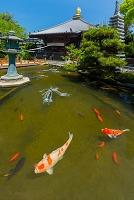 徳島県 四国八十八箇所霊場第一番札所 霊山寺 大師堂と泉水池