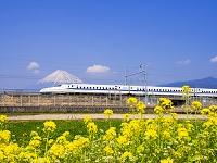 静岡県 新幹線と菜の花と富士山