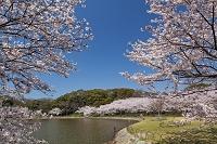 兵庫県 明石公園