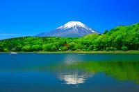山梨県 新緑の富士山と山中湖