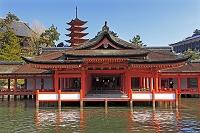 広島県 宮島の厳島神社と五重塔