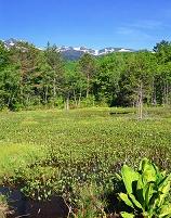 長野県 松本市 どじょう池