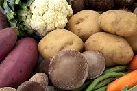 収穫(根菜類とカリフラワー