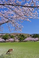 奈良県 奈良公園と若草山