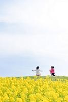 菜の花畑と子供