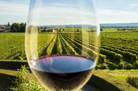 イタリア ヴェネト州 赤ワインとブドウ畑