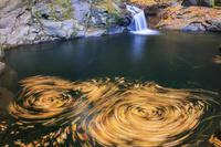 三重県 落葉の流れのパターン 赤目四十八滝