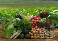畑の前の新鮮野菜
