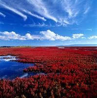 赤く染まる, サンゴ草