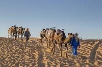 モロッコ サハラ砂漠とラクダ