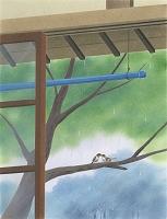 梅雨の巣立ち